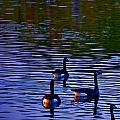 Song Of Geese by Joan Han