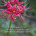 Song Of Solomon - The Flowers Appear by Kathy Clark