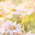 Song Of Spring I - Lovely Soft Pink Daisies by Beverly Claire Kaiya