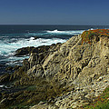 Sonoma Coast 1 by David Armentrout