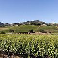 Sonoma County Vineyards by Carol M Highsmith