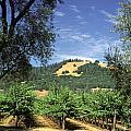 Sonoma Valley Vineyard by Craig Lovell