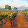 Sonoma Vineyard by Carolyn Jarvis