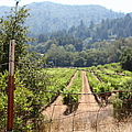 Sonoma Vineyards In The Sonoma California Wine Country 5d24521 by Wingsdomain Art and Photography
