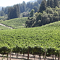 Sonoma Vineyards In The Sonoma California Wine Country 5d24539 by Wingsdomain Art and Photography