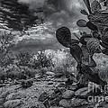 Sonoran Desert 15 by Mark Myhaver