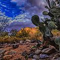 Sonoran Desert 54 by Mark Myhaver