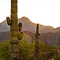 Sonoran Desert II by Robert Bales