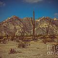 Sonoran Desert by Robert Bales