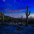 Sonoran Desert Saguaro Cactus by Scott McGuire