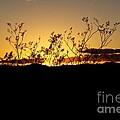 Sonoran Desert Sunset by Kerri Mortenson
