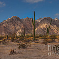Sonoran  by Robert Bales