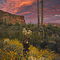 Sonoran Romance by Peter Coskun