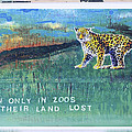 Soon Only In Zoos  Their Land Lost by Mary Ann  Leitch