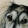 Sophia's Eyes by Cori Solomon