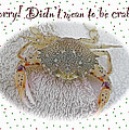 Sorry I Was Crabby Greeting Card - Calico Crab by Mother Nature