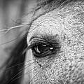 Soulful Horse Eye by Priya Ghose
