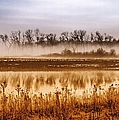 Sounds Of Silence by Tom Druin