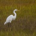 Soundside Park Topsail Island Egret by Betsy Knapp