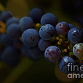 Sour Grapes by Photography by Tiwago