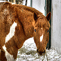 South Barrington Horse 2