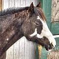 South Barrington Horse by Deborah Smolinske