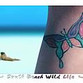 South Beach Wild Life by Mike McGlothlen