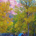 South Campground In Zion Np-ut by Ruth Hager