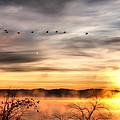 South Carolina Morning by Lynne Jenkins