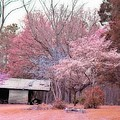 South Carolina Pink Fall Trees Nature Landscape by Kathy Fornal