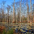 South Carolina Swamps by Susanne Van Hulst