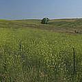 South Dakota Homestead by Garry McMichael