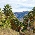 South Side View Of Andreas Canyon Trail In Indian Canyons-ca by Ruth Hager
