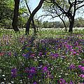 South Texas Meadow by Susan Rovira