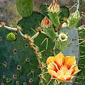 South Texas Prickly Pear by Sue Sill