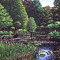Southampton Hillier Gardens by Martin Davey