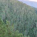 Southeast Forest Ridges by Wayne Lawler