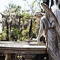 Southern Angel II by John  Nickerson
