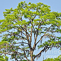 Southern Cypress by Al Powell Photography USA