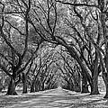Southern Journey Bw by Steve Harrington
