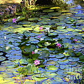 Southern Lily Pond by Carol Groenen