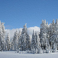 Southern Oregon Forest In Winter by Todd L Thomas