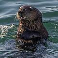 Southern Sea Otter 2 by Randy Straka
