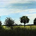 Southern Serenity by Judy Hall-Folde