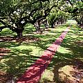 Southern Shadows by Rhonda Burger