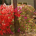 Southern Spring Color by Matthew Seufer