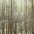 Southern Swamp by Brett Pfister