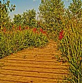 Southgate Boardwalk Retro by Daniel Thompson