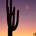 Southwest Desert Moon Glow by James BO Insogna