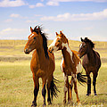 Southwest Wild Horses On Navajo Indian Reservation by Jerry Cowart